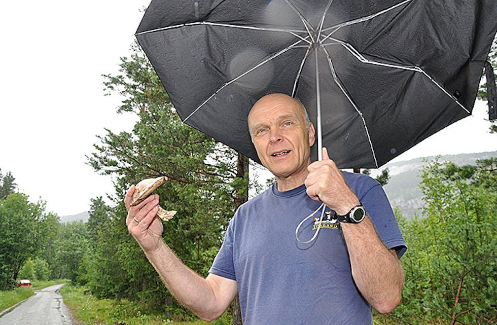 Brunskrubb. Dette er ein litt gammal brunskrubb, plukka 30. juni, men Bjørn Steen fortel at ein godt kan finne matsoppen raudskrubb sjølv om det er tidleg til soppsesong å vere.