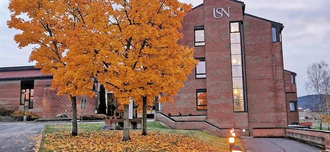 FARGEGLAD HAUST. Fine tre ved universitetet i Bø.