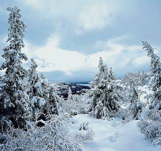 201210-Jonnbu-Krintofjell-061220-0697-vinterskog