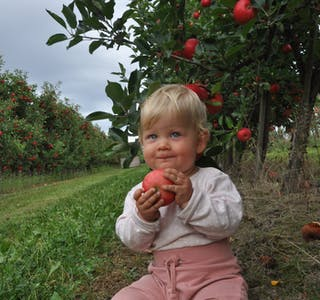 Johanna Ytreland eple eplefest barn