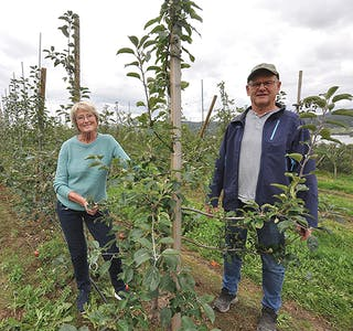 Åsta Vina Svaland Torbjørn Svaland  eple bønder epleprodusent god sesong