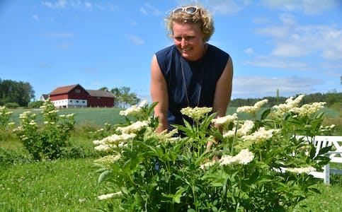 SVARTHYLL:Mie Dahlmann Jensen i hylleblomsthagen på leigeareala på Bøen. Det er naboarealet til der ho har basen sin på Haugland i Bø. Foto: Øystein Akselberg